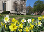 Project Daffodil, Tarrytown, NY