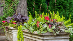 Container gardening in Westchester, NY